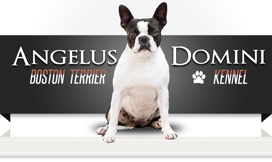 Angelus Domini Kennel | ENG